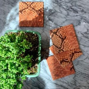 Other - Animal Print Table Coasters